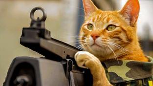 Twitter zaplavily fotografie koček, Belgičané tak s humorem reagovali na žádost policie nepsat na sociálních sítích o probíhající protiteroristické akci