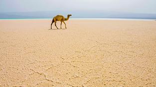 Hlavní město Džibuti sice leží stejně jako Dubaj v neúrodné poušti, má ale jiné výhody. Na snímku jezero Assal