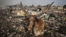 Obří hřbitov elektoniky v Ghaně