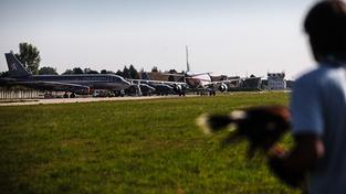 Střetům se zvěří se na letišti snaží zabránit takzvaná biologická ochrana, tedy hlavně sokolníci