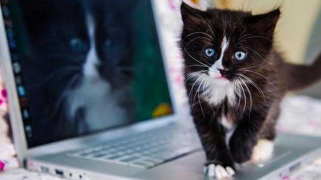 Na internetu lze najít miliony a miliony fotek roztomilých mláďat. O diváky mají vždy postaráno