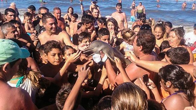 Na mládě delfínovce si chtěl každý sáhnout a vyfotit si ho. Do vody se už zpět nedostalo...