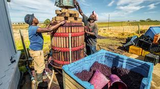 Vinaři v jihoafrickém Paarlu