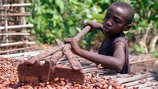 Záběr z dokumentárního firmu o dětské práci na několika čokoládových farmách