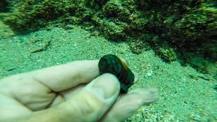 """Archeologové našli """"mince duchů"""" z lodi objevitele Vasca de Gamy"""