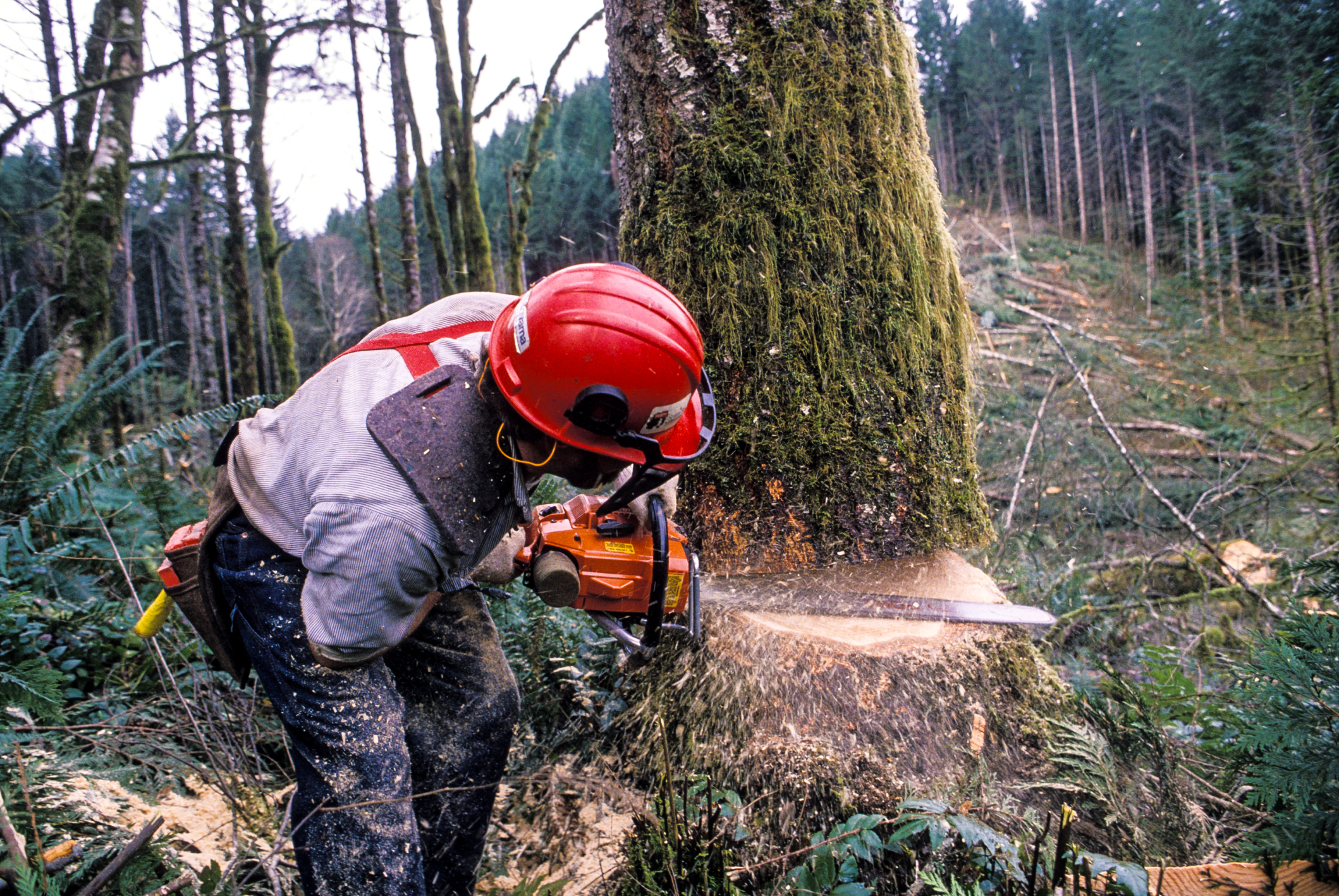 картинки лесорубы рубят лес пилигрим