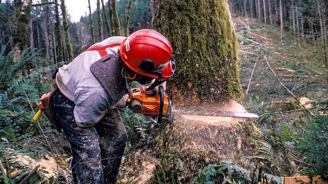 Nejrizikovější profesí je práce v lese (Ilustrační snímek)