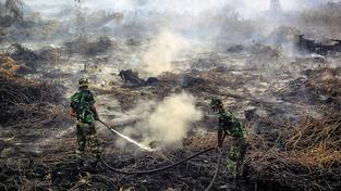 Kvůli výrobě palmového oleje se nelegálně vypalují částí lesů, což zpravidla vyvolává rozsáhlejší požáry