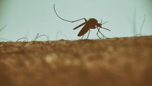 Sprej proti hmyzu bude patřit mezi k olympiádě v Riu stejně jako slavná pláž Copacabana