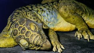 Zhruba tak nějak jsme si Psittacosaura představovali doteď. Vědci teď ale mají mnohem přesnější představu o jeho vzhledu