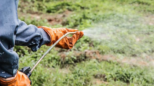 Herbicidy likvidují nejen plevel, ale možná i lidské zdraví. Ilustrační snímek