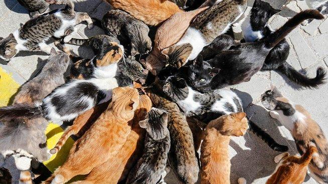 Kočičí gang na Kypru