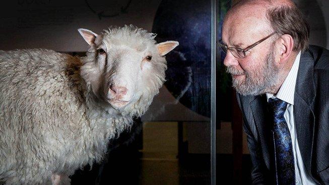 Dolly - ovce, která změnila pohled na klonování