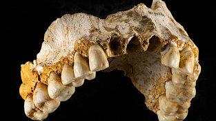 Zuby neadrtálce (ilustrační foto)