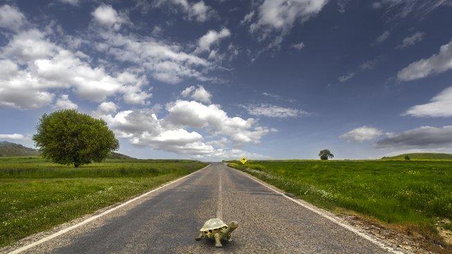 Je libo vyvenčit želvu?