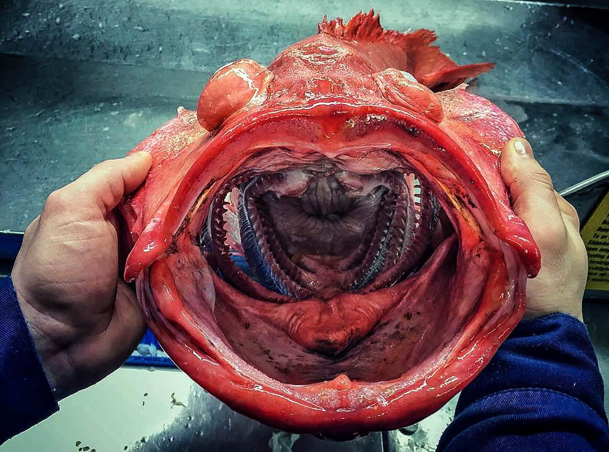 'Vetřelci' z hlubin oceánu