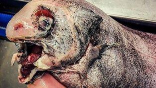 Bestie z hlubin: Děsiví, ale fascinující tvorové z moří a oceánů
