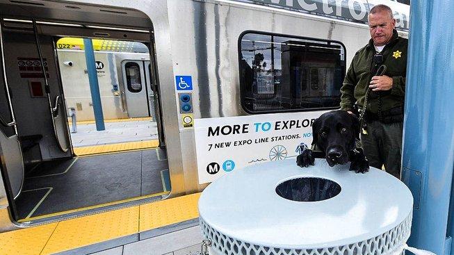 V kalifornské Santa Monice pomáhá s vyhledáváním výbušnin i labrador Max