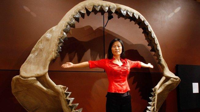 Carcharocles megalodon měl čelisti skutečně obrovské