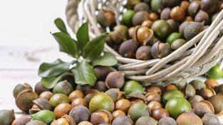 Makadamové ořechy jsou v současnosti velmi oblíbené. Ochutnat je můžete třeba ve zmrzlině nebo čokoládě