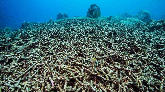 Zničený korálový útes na Filipínách. Ilustrační snímek