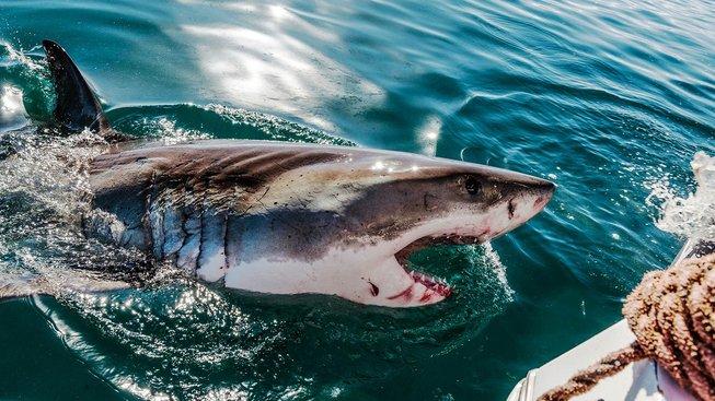 Drony budou vyhledávat žraloky a pokud se přiblíží australskému pobřeží, pošlou varování pobřežní stráži. Ilustrační snímek