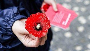 Květ vlčího máku, symbol Dne válečných veteránů