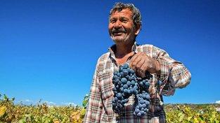 Turecké hrozny jsou velmi kvalitní, víno z nich ale nevzniká