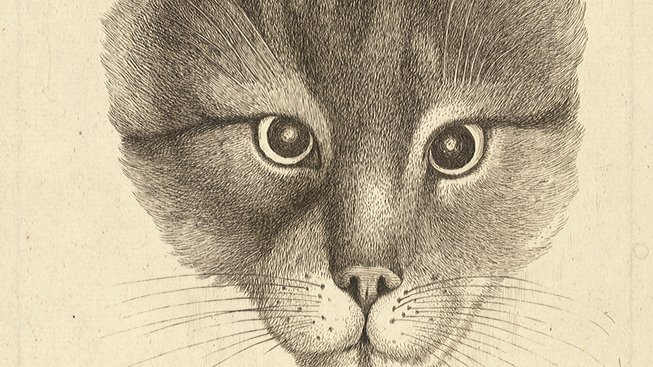 Wenceslas_Hollar_-_Head_of_a_cat_(middle_size)