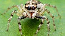Úžasní pavouci