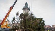 Strom ze Staroměstského náměstí putoval do zoo