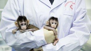 Naklonovaní opičáci Čung Čung a Chua Chua