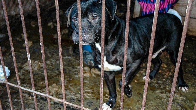 Zvířecí peklo  Policisté odebrali  chovatelce  stovky týraných psů 5398d1c578