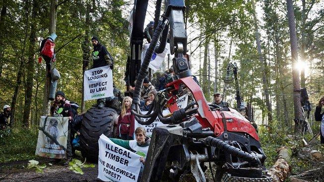 Aktivisté loni zabrali kombajn a protestovali proti těžbě v pralese