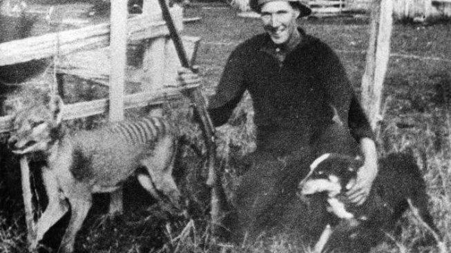 Wilf_Batty_last_wild_Thylacine