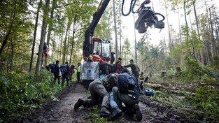 Těžbu v chráněném pralese doprovázely střety ekologických aktivistů s policií