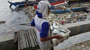 Sedmdesát procent mořských ryb má ve střevech mikroplasty. Ilustrační snímek