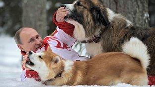 Svého akitu má i ruský prezident Vladimir Putin