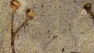 Nejstarší rostlinná fosilie světa