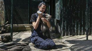 """Útulek v řeckém Arcturosu se stará o traumatizované medvědy a vlky od mláďat až po """"důchodce"""""""