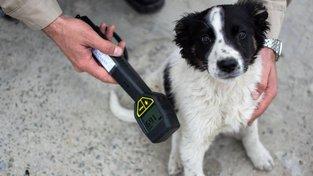 V okolí elektrárny v Černobylu žije asi tisícovka psů