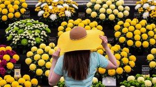 Ukázku spojení přírody a nemocnice každý rok představuje slavný květinový festival v Královské nemocnici v Chelsea