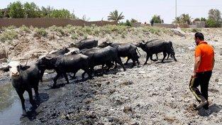 Írán trpí nejhoršími suchy za posledních 30 let