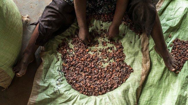 Kakaové boby sloužily jako platidlo. Ilustrační snímek