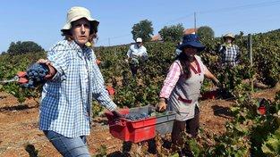 Středomoří bude časem pro pěstování vinné révy nevhodné. Ilustrační snímek