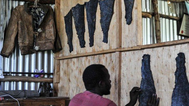 Ze zbytků ryb v koželužně stáhnou kůži a vytvoří z ní bundy, boty či kabelky