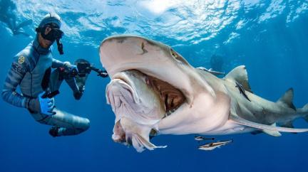 Máme se teď bát žraloků? Anebo spíš sinic?