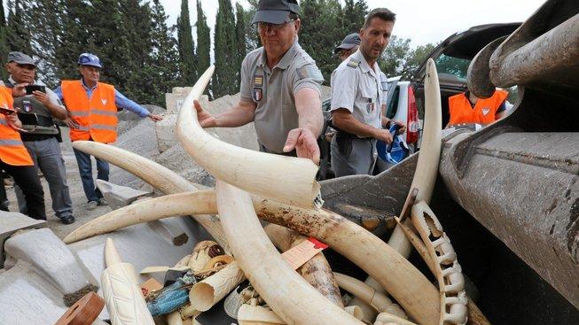 Dvacet procent předmětů bylo vyrobeno ze slonoviny slonů zabitých po roce 1990. Ilustrační snímek