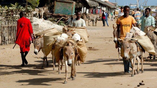 Keňští oslíci v akci