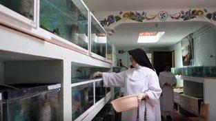 Mexické jeptišky zachraňují vzácné salamandry
